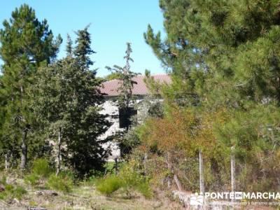 Castañar de la Sierra de San Vicente - Convento del Piélago;arbol del tejo;agencias de senderismo